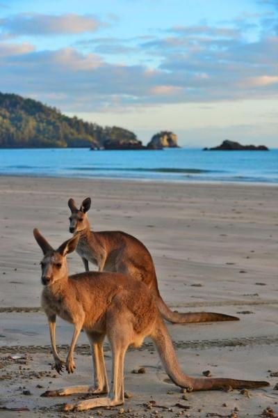 Indiai mérkőzés készítése Ausztráliában